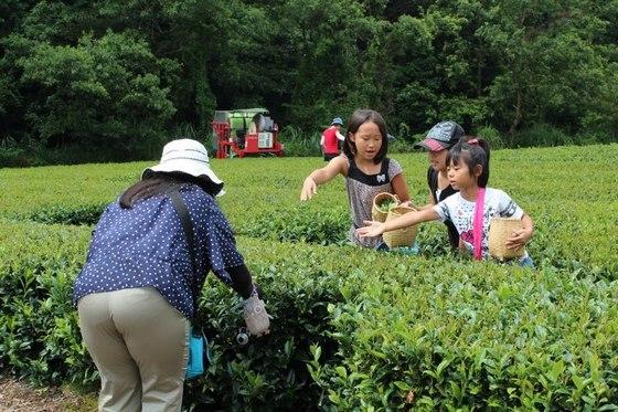 手作り紅茶体験ツアー