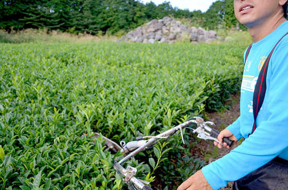 魚粉主体の有機肥料