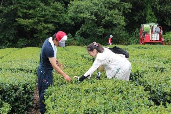手作り紅茶体験(お土産・お弁当付き)