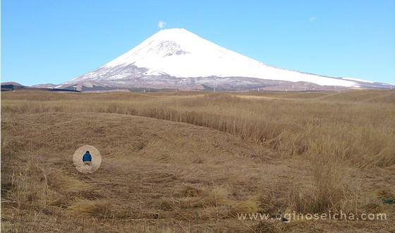 自衛隊御殿場演習地の富士山にて、茅(ススキの枯れたもの)を刈り