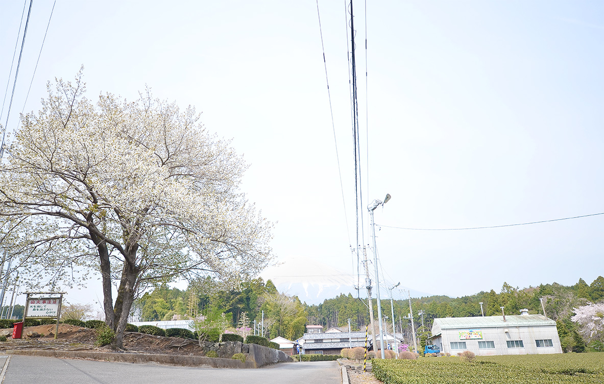 富士山と桜とお茶